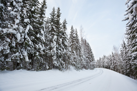 winter weather: Snow covered road in forest at winter