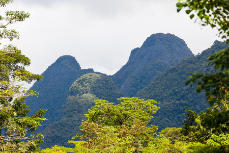 scenic view: Exotic rainforest landscape from gunung mulu national park borneo malaysia