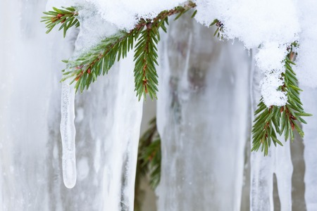 icicle: Icicle hanging from spruce tree branch Stock Photo