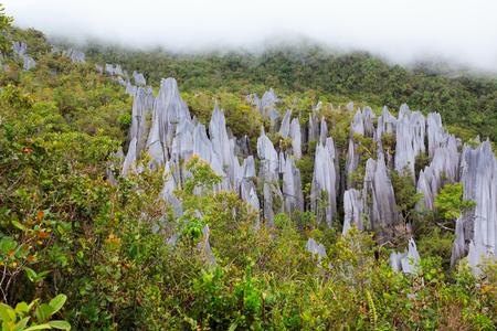gunung mulu 국립 공원 보르네오 말레이시아에서 석회암 피너 클 형성 스톡 콘텐츠