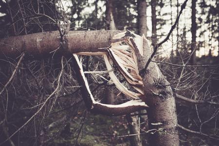 �tree: Tormenta �rbol roto primer plano Foto de archivo