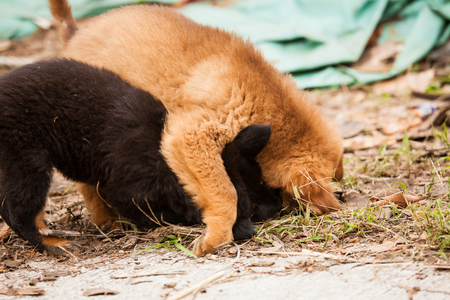 stray: Cute stray puppies playing together Stock Photo