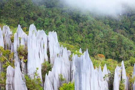limestone pinnacles formation at gunung mulu national park borneo malaysia Banque d'images