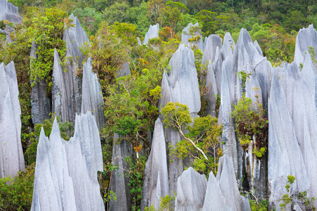 karst: limestone pinnacles formation at gunung mulu national park borneo malaysia Stock Photo