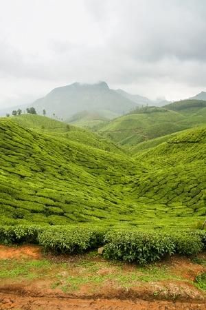 tea plantations: Road in tea plantations at munnar india on a cloudy day
