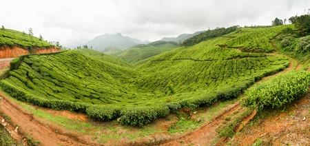 tea plantations: Road in tea plantations at munnar india on a cloudy day panorama Stock Photo