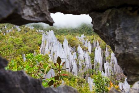 limestone pinnacles formation at gunung mulu national park borneo malaysia 免版税图像