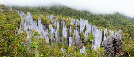 forest park: limestone pinnacles formation at gunung mulu national park borneo malaysia Stock Photo