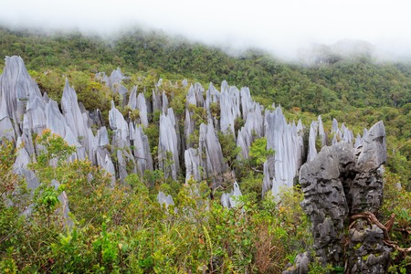 limestone pinnacles formation at gunung mulu national park borneo malaysia Reklamní fotografie