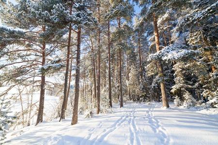 winter finland: Sun shining through trees at lakeside winter finland Stock Photo