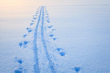 winter finland: Ski tracks snow lake winter finland