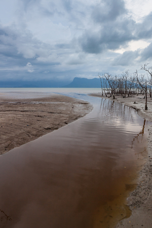 tide: Dead trees in beach at low tide and storm clouds Stock Photo