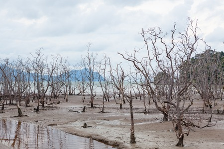 storm tide: Dead trees in beach at low tide and storm clouds Stock Photo