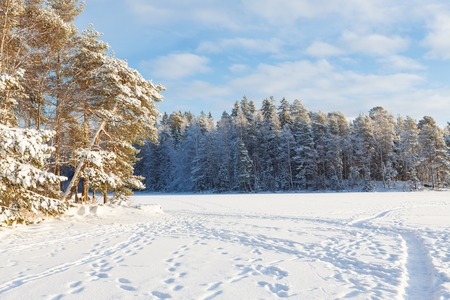 snow covered forest: Frozen lake and snow covered forest at sunny winter day in finland Stock Photo