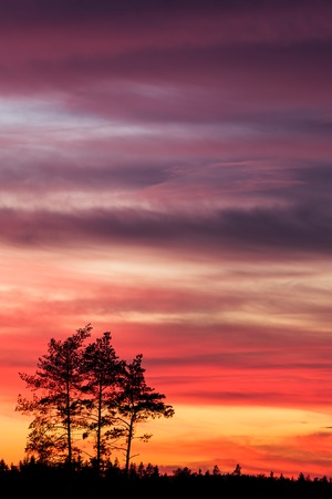 tree landscape: Tree silhouette and beautiful vibrant sunset clouds background
