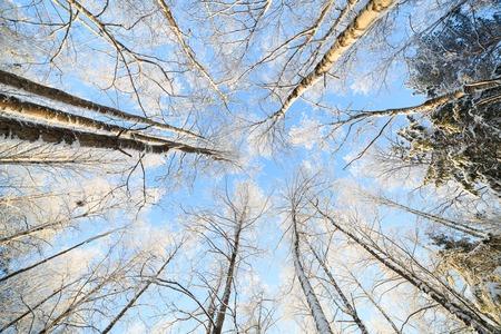 Sneeuw bedekt boom perspectief uitzicht op zonnige koude winterdag