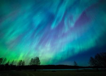 Northern lights aurora borealis tree landscape at night 免版税图像