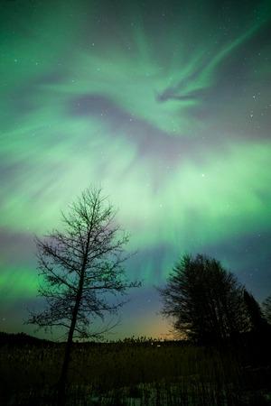 geomagnetic: Northern lights aurora borealis tree landscape at night Stock Photo