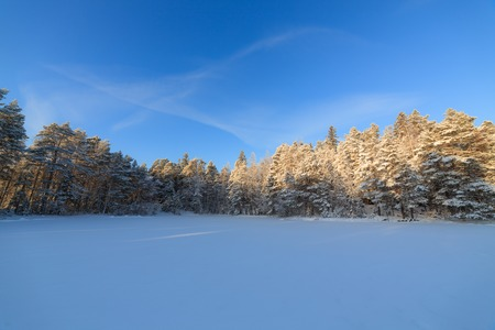 snow covered forest: Frozen lake and snow covered forest at cold sunny winter day in Finland