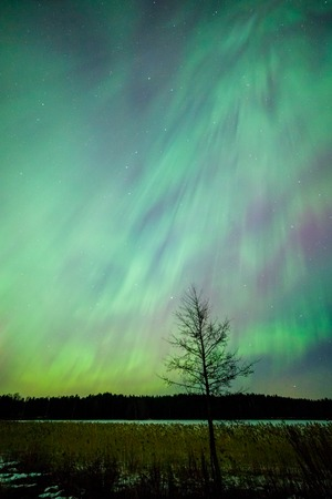 ionosphere: Northern lights aurora borealis tree landscape at night Stock Photo