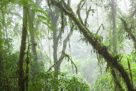Misty regenwoud in Monteverde Costa Rica