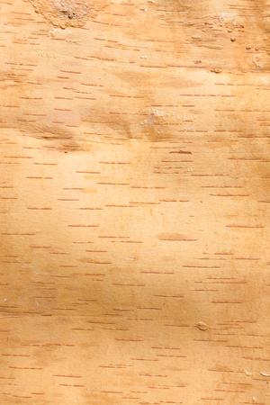 birch bark: Birch bark texture inside