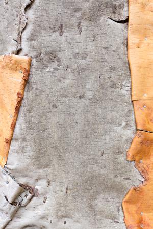birch bark: Birch bark texture background Stock Photo