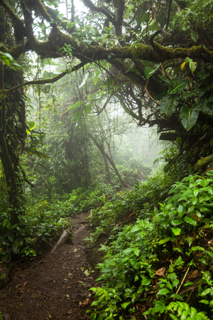 Lush mistig regenwoud La Fortuna Costa Rica