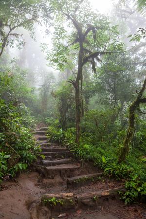 fortuna: Hiking trail in lush rainforest La Fortuna Costa Rica