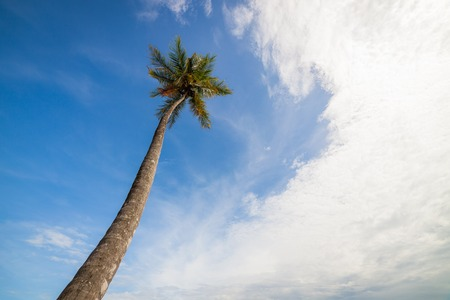 Tall palm tree against partly cloudy sky