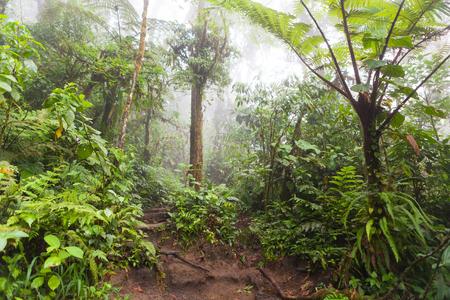 fortuna: Lush foggy rainforest La Fortuna Costa Rica