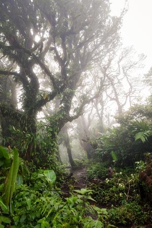 fortuna: Deep in lush foggy rainforest Stock Photo