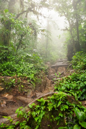 Hiking trail in lush rainforest Stock Photo