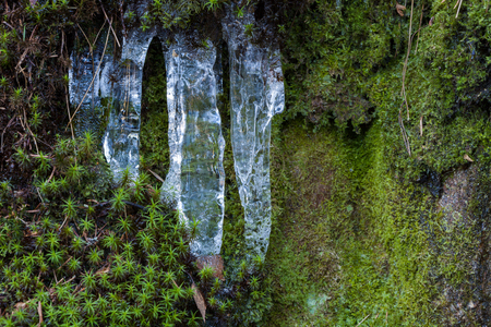 sopel lodu: Small icicles and moss