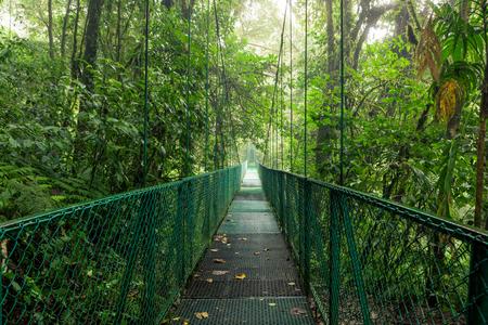 Suspension bridge in rainforest Stock Photo