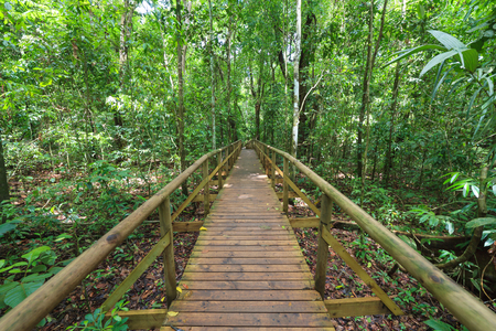 Boardwalk in forest Manuel Antonio Stock Photo