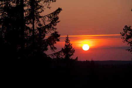 Sun setting over forest