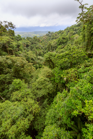 treetops: Lush rainforest canopy view