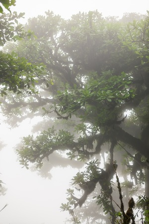 humid: Deep in lush foggy rainforest Stock Photo