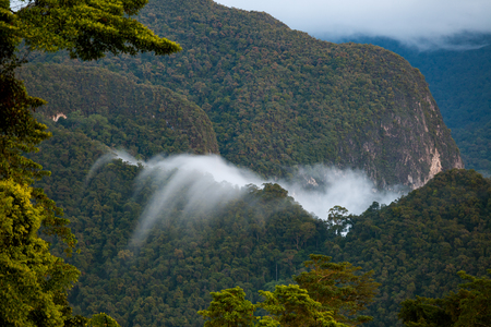 Exotic rainforest landscape Stock Photo