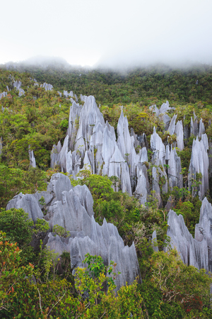 Limestone pinnacles at gunung mulu national park Stock fotó
