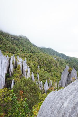 limestone pinnacles formation at gunung mulu national park borneo malaysia Stock Photo