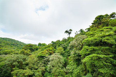Lush Rainforest Canopy Monteverde Costa Rica Stock Photo Picture And Royalty Free Image. Image 84529676. & Lush Rainforest Canopy Monteverde Costa Rica Stock Photo Picture ...