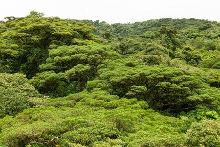 Lush rainforest canopy Monteverde Costa Rica 写真素材