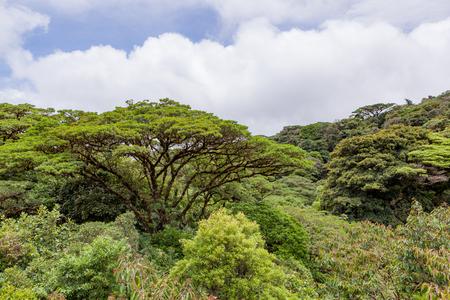 무성한 열대 우림 캐노피 Monteverde 코스타리카 스톡 콘텐츠
