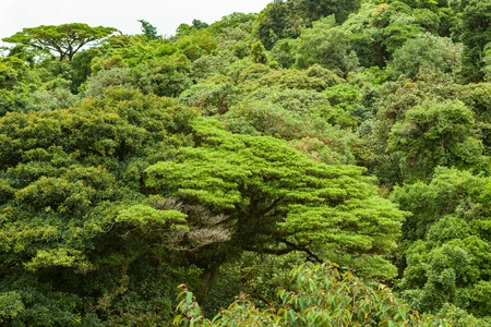 Lush rainforest canopy Monteverde Costa Rica Stock Photo