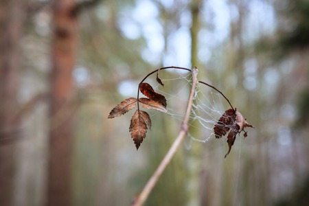 Twig and web in forest