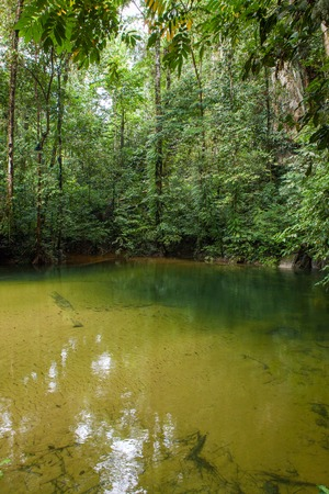 Crystal clear water in river at Gunung Mulu national park Borneo Malaysia