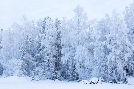 Trees covered in frost snow nature winter lakeside scene Stock Photo
