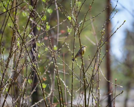 Small bird in bush